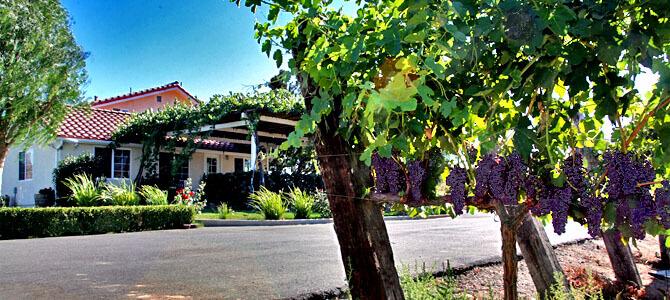 Vineyard-Looking-Toward-Patio-Lage